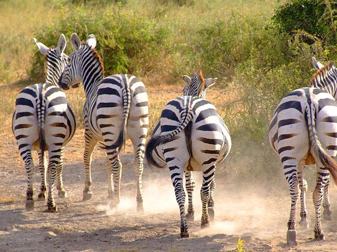 Een safari in Kenia is een unieke belevenis