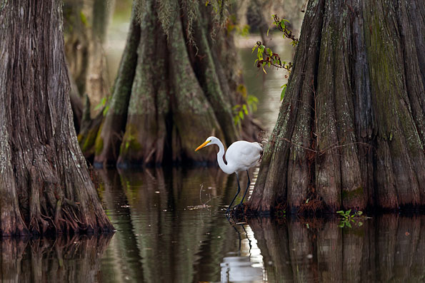 Cajun Wetlands in Louisiana