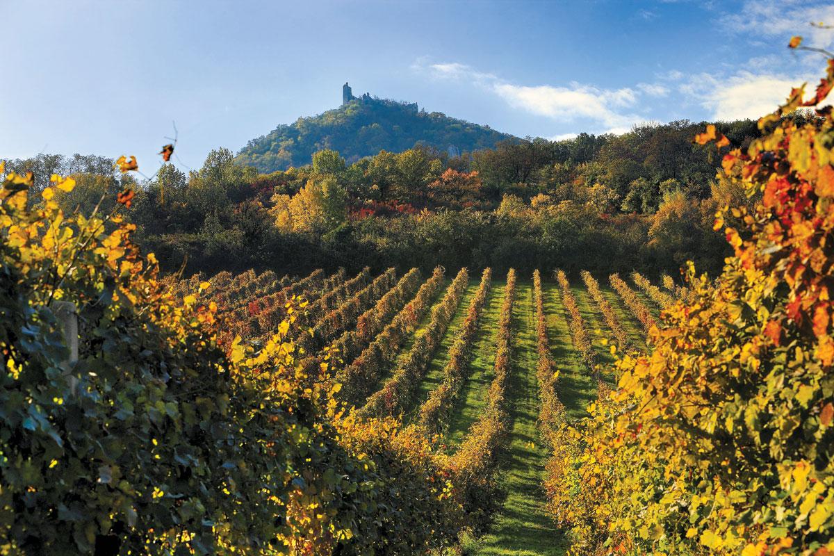 Wijngaarden in Moravië
