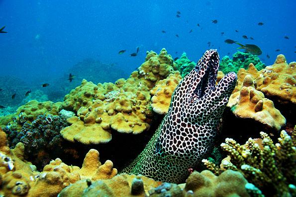 Onderwaterwereld van Oman