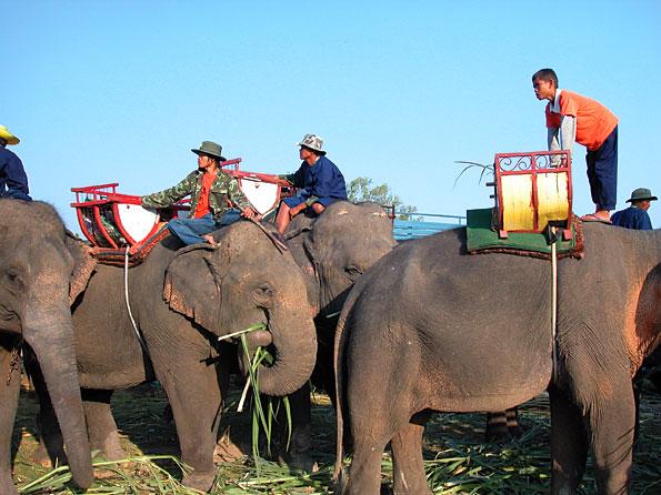 Olifantenfestival in Surin, Thailand