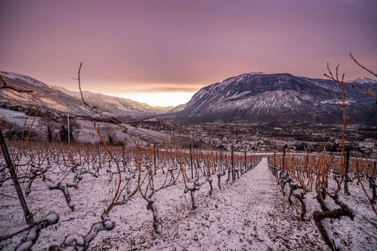 Wijnranken in Val d'Anniviers