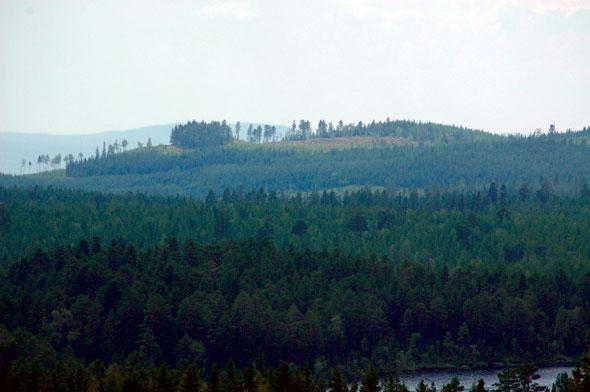 De bossen van Dalarna