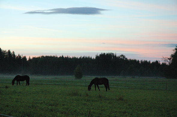 Paardrijden in Zweden